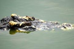 Nahaufnahmeauge Krokodil Stockfoto