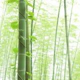 Nahaufnahmebambus und steigende Rebe im asiatischen Wald Stockfoto
