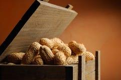 Nahaufnahmebehälter gefüllt mit Erdnüssen stockfotografie