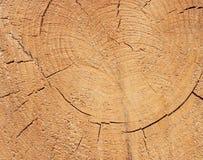 Nahaufnahmebeschaffenheit eines Baums Stockbilder