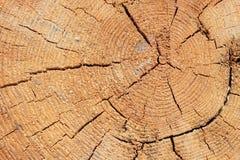 Nahaufnahmebeschaffenheit eines Baums Lizenzfreie Stockfotografie