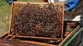 Nahaufnahmebienenwabe voll von Bienen und von Honig stock video footage