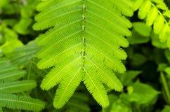 Nahaufnahmebild des grünen Blattes, Hintergrund Lizenzfreies Stockfoto