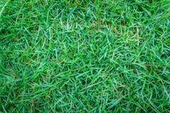 Nahaufnahmebild des grünen Grases Stockbilder