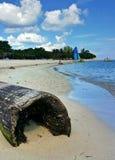 Nahaufnahmebild des Palmestammes und Katamaran auf blauem Ozean setzen auf den Strand Lizenzfreie Stockfotos
