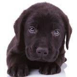 Schwarzes labrador retriever-Hündchen, das die Kamera untersucht Lizenzfreie Stockbilder