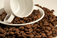 Nahaufnahmebild von Porzellancup auf gebratenen Kaffeebohnen Stockbilder