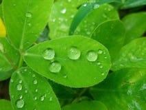 Nahaufnahmeblatt mit Wassertropfen Stockfotos