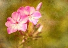Nahaufnahmeblumen auf Beschaffenheit. Stockfotografie