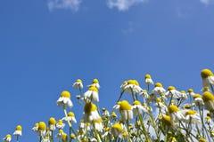Nahaufnahmeblumen im Sommer Stockfoto