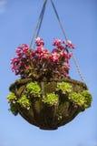 Nahaufnahmeblumen im Sommer Stockbild
