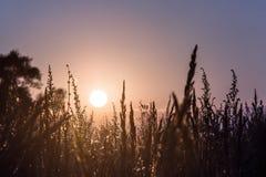 Nahaufnahmeblumenrasenfläche und Sonnenunterganghintergrund am Abend lizenzfreies stockbild