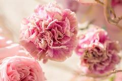 Nahaufnahmeblumenstrauß der frischen Gartennelke und der Rose Ereignisdekoration wi stockbilder