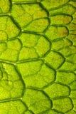 Nahaufnahmedetail des Blattes Stockbilder