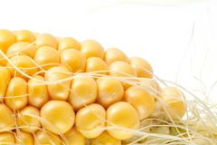 Nahaufnahmefoto der gelben Maishintergrund-, gesunder und geschmackvollernahrung lizenzfreie stockfotografie