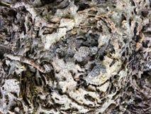 Nahaufnahmefoto der Termiten-Kolonie in der Natur lizenzfreie stockbilder
