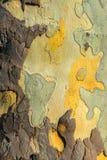 Nahaufnahmefoto eines Baumstammes Lizenzfreie Stockfotos