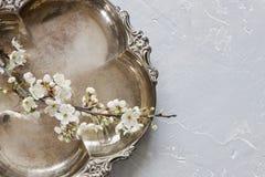 Nahaufnahmefoto von blühenden Blumen des schönen Weiß der Kirschbaumniederlassung auf weißem hölzernem Schneidebrett auf grauem H Lizenzfreies Stockbild
