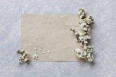 Nahaufnahmefoto von blühenden Blumen des schönen Weiß des Kirschbaums verzweigt sich auf Blatt Papier auf grauem Hintergrund Besc Lizenzfreies Stockfoto