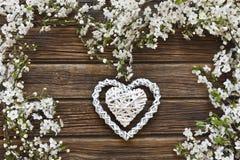 Nahaufnahmefoto von schönem weißem blühendem Cherry Tree verzweigt sich Stockfoto