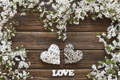 Nahaufnahmefoto von schönem weißem blühendem Cherry Tree verzweigt sich Stockbilder