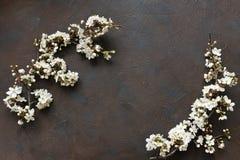 Nahaufnahmefoto von schönem weißem blühendem Cherry Tree verzweigt sich Draufsicht, Konzept für Mutter ` s Tag, Hochzeit, Verpfli Lizenzfreies Stockfoto