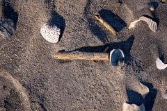 Nahaufnahmefoto von sortierten Oberteilen und von Treibholz bessert auf dunklem Sand von einem Florida-Strand aus Stockbilder