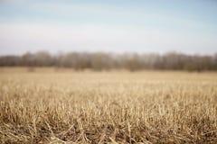 Nahaufnahmefoto von trockenen gras auf ländlichem Feld im Vorfrühling mit Wald hinten Stockbilder