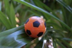 Nahaufnahmefußball auf grünem Blatt stockbild