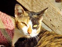 Nahaufnahmegesicht der Katze Lizenzfreie Stockfotos