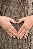 Nahaufnahmehände, die Herz auf Baum bilden Stockbilder