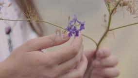 Nahaufnahmehände einer jungen Frau, welche die wilde Blume hält Das Mädchen, welches die violette Blume berührt Verbindung mit Na stock video footage
