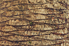 Nahaufnahmehintergrundbeschaffenheit der exotischen Palme Stockbilder