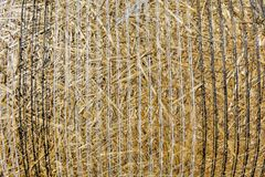 Nahaufnahmehintergrundstapel Stroh nach der Ernte des Getreides erntet Stockbilder
