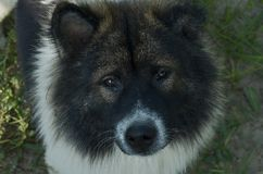 Nahaufnahmehundegesichtsarchivbilder stockbild