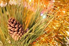Nahaufnahmekegel auf Weihnachtsbaumzweig Stockfotos