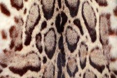 Nahaufnahmeleopardhaar für Hintergrund Stockfoto