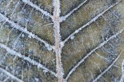 Nahaufnahmemakrodetail des gefrorenen Blattes Stockfoto
