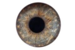 Nahaufnahmemakroiris des weiblichen grünen Auges lokalisiert Stockfotografie