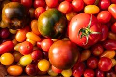 Nahaufnahmemischung der kleinen und großen Tomate lizenzfreies stockbild