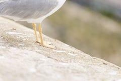 Nahaufnahmen der Beine einer Seemöwe stockfotos