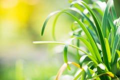 Nahaufnahmenaturansicht des grünen Blattes auf Sonnenlicht Lizenzfreies Stockbild