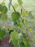 Nahaufnahmenaturansicht des grünen Blatthintergrundes im Garten mit dem Kopienraum, der als natürliche Grünpflanzen des Hintergru lizenzfreie stockfotos
