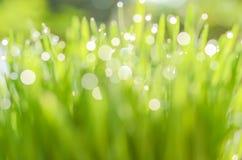 Nahaufnahmenaturansicht und abstraktes Bokeh des grünen Blattes auf unscharfem grünem Hintergrund stockfotografie