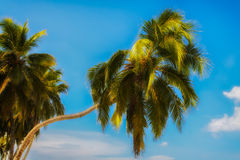 NahaufnahmePalmen in Playa BLANCA Lizenzfreies Stockbild