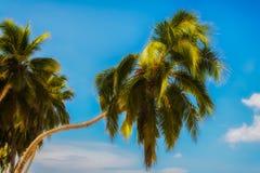 NahaufnahmePalmen in Playa BLANCA Lizenzfreies Stockfoto