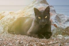 Nahaufnahmeporträt der schwarzen Katze mit orange Augen Stockfotografie