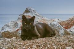 Nahaufnahmeporträt der schwarzen Katze mit orange Augen Lizenzfreie Stockfotografie