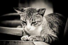 Nahaufnahmeporträt der traurigen einsamen Katze Lizenzfreies Stockbild