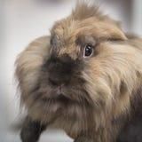 Nahaufnahmeporträt eines recht dekorativen Kaninchens Stockfotos